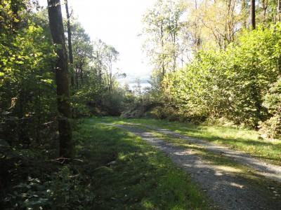 Veien til Sandviga og Sultelia er fint opparbeidet.