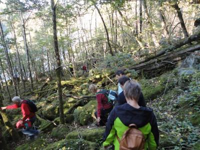 Stien fra Sultelia til Børnestranda er grei å gå, men en del trefall og tilgroing fins.